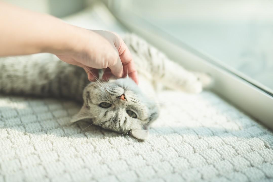 保護 猫 おむすび